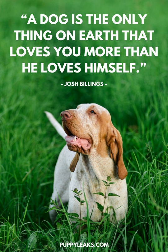 Beautiful Quotes On Dogs Twitter