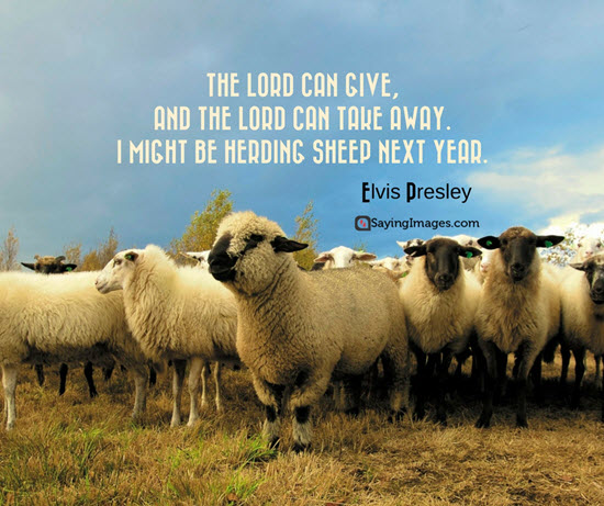Cute Sheep Quotes